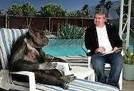 EXCLUSIVE 24th June 2008, Palm Springs, California. 76-year-old Cheeta, star of many Hollywood Tarzan films of the 1930s and 1940s, is coming out of retirement. Recognized as the oldest chimpanzee alive, the Palm Springs resident has just signed a record deal. To celebrate the signing, Cheeta made a promo music video to accompany his cover of the 1975 hit song 'Convoy'. Pictured with Cheeta signing the contract is record exec. John Trickett of independent music label Immergent. PHOTO © JOHN CHAPPLE / www.johnchapple.com.tel: +1-310-570-9100