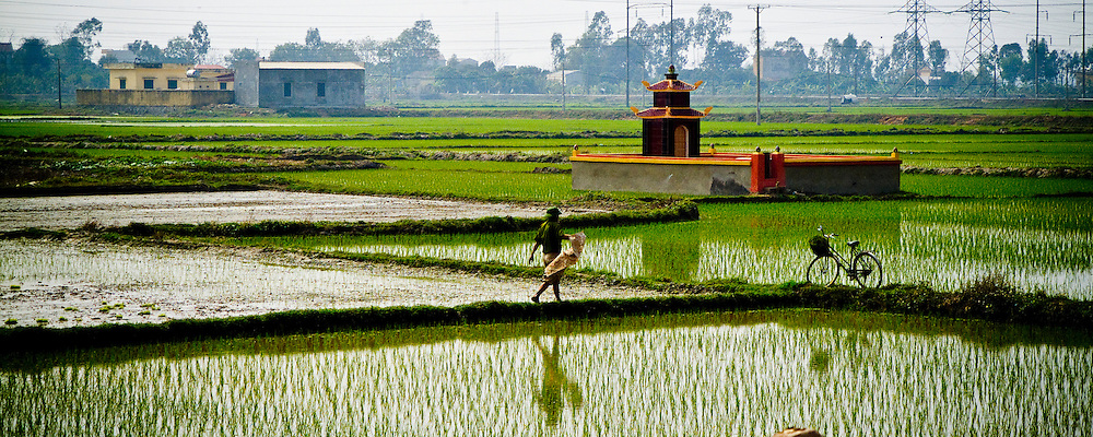 Vietnam, Rice farming