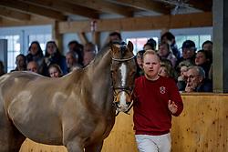 For Ever Jump an der Hand<br /> Klein Offenseth - Hengstschau Stall Hell 2020<br /> © www.sportfotos-lafrentz.de/Stefan Lafrentz