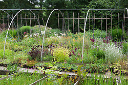 The stock nursery at Glebe Cottage in early July
