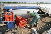 Nederland, Wellerlooi, 6-5-2017Langzaam komt het aspergeseizoen op gang. Een poolse seizoenswerker steekt de asperges die het kopje al boven de grond laten zien. De aspergespin is een elektrische landbouwmachine die stapvoets beweegt, het plastic optilt zodat het aspergebed vrij komt, en het plastic weer laat zakken. Vooral handig als er nog niet massaal wordt gestoken en de grond warm gehouden moet worden om het groeiproces te versnellen. Foto: Flip Franssen