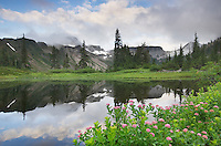 Table Mountain reflected in small lake in Heather Meadows Recreation Area, North Cascades Washington. In the foreground is Rosy Spiraea (Spiraea splendens)