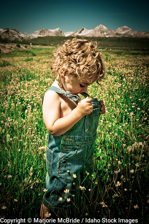 Little boy looking down his overalls in a flowering meadow. Stanley, Idaho.