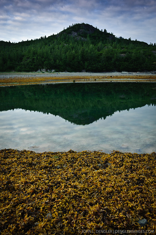 A small hill at Wolf Point is reflected in a low tide tidal pool in Muir Inlet in Glacier Bay National Park and Preserve in southeast Alaska. In the foreground is rockweed.