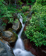Water of Grape Vine Spring cascades over mossy boulders, with ferns and monkey flower, along Left Fork of North Creek, Zion National Park,   (medium format original) © 1998 David A. Ponton