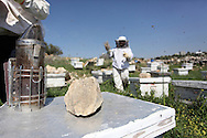 With the hives kept in large open fields which are exposed to the elements, rocks are kept on top of each hive to ensure the wind cannot blow the lids off the hives.<br /> Nilli Abu-Rahma, Bil'in, Ramallah, West Bank, Palestine.