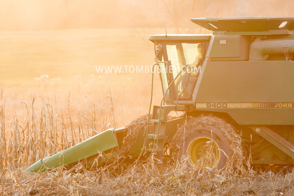 Middletown, New York - A farmer harvests corn in a field on Dec. 10, 2015.