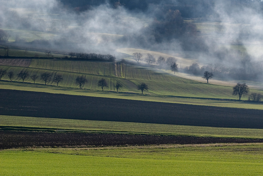 Landscape with mist and trees. Auvergne, France