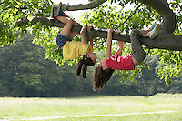 Two girls (7-9) hanging upside down in tree