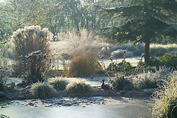 View over the frozen pond on a frosty morning in winter. Eryngium seedheads, backlit grasses and an ornamental duck. Design: John Massey, Ashwood Nurseries