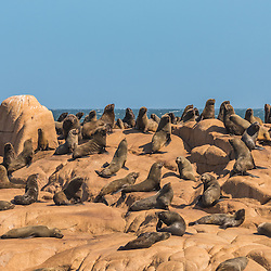 Colony of sealions on a rock at sea, Cabo Polonio, Uruguay.