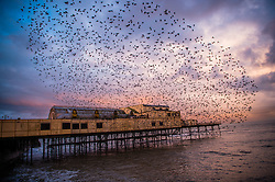 © London News Pictures. 11/02/2016 Aberystwyth, Wales, UK. At first light tens of thousands of starlings leave their overnight roost underneath Aberystwyth seaside pier. Aberystwyth pier is one of only a small handful of urban starling roosts in the UK.  Photo credit: Keith Morris/LNP