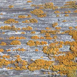 Bark Detail, Pt. Reyes, Marin County, California, US