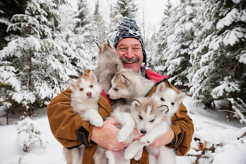 A musher and his litter of young pups