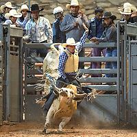 080615      Cayla Nimmo<br /> <br /> Yolando Leonardo from Lukachukai breaks out of the bucking shoot for the bull ride competition at the Ceremonial Rodeo at Red Rock park Thursday.