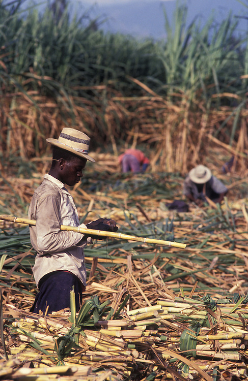 Workers harvest sugar cane, a brutally tough job, in the equatorial heat of Southern Colombia.