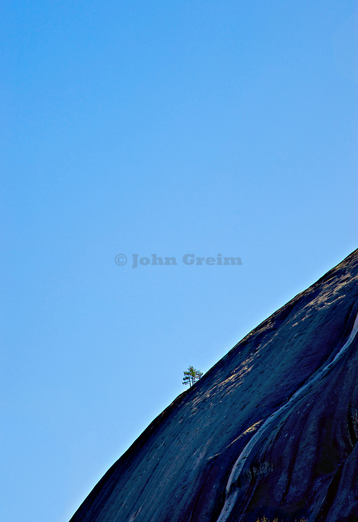 Lone tree growing out of the rocky surface of Stone Mountain, Georgia