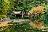 Hatley Castle built by James Dunsmuir had landscape architects from Boston design the surrounding gardens including this Japanese Garden complete with bridge and island which stretches out into a large tranquil water feature.  Victoria, Vancouver Island, British Columbia, Canada.