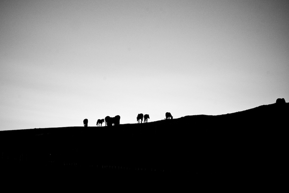 Horses graze on a hillside at sunset in rural Mongolia.