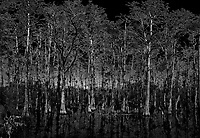 Cypress Swamp along Loop Road in Big Cypress National Preserve. Winter Nature in Florida Composite of 4 images taken with a Leica T camera and 11-23 mm lens.
