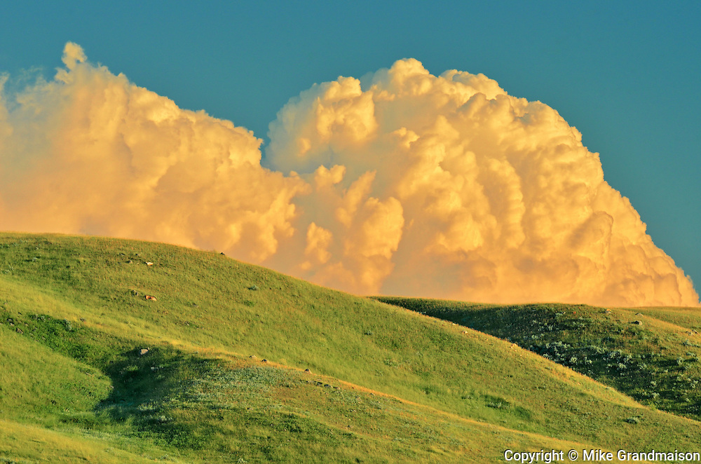 Grasslands at sunset with cumulus cloud buildup for powerful storm  (West Block) <br /> Grasslands National Park<br /> Saskatchewan<br /> Canada