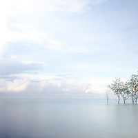 Calm early morning waters off the coast of Tetapare, the Solomon Islands, the largest uninhabited tropical island in the southern hemisphere
