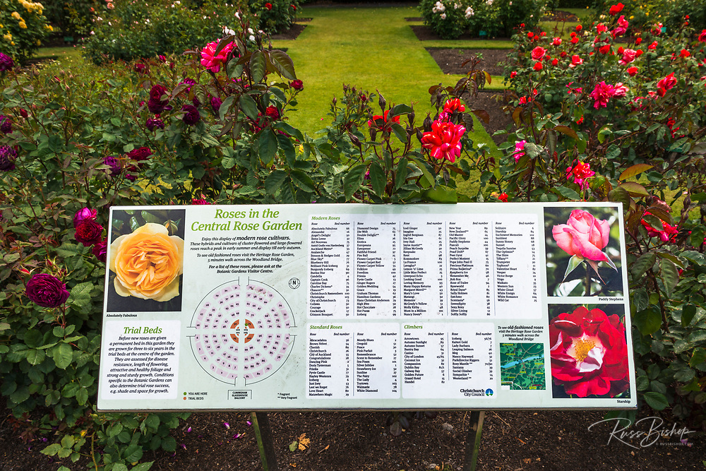 Rose identification sign in the Central Rose Garden, Christchurch, Canterbury, South Island, New Zealand