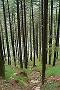 India, Kullu District, Himachal Pradesh, landscape near Nagar, Northern India the