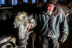 Craig Wortman, of Bethel, pauses to pet Dolly, ten-year-old a blue roan Shorthorn-Holstein cross, while feeding his herd at Green Acres Milking Shorthorns in South Randolph, Vt. Tuesday, January 5, 2016. Dolly, the herd matriarch and one of Wortman's wife Joan's favorites, has been unable to become pregnant and her milk production has dropped forcing the Wortmans to consider sending her to slaughter. (Valley News - James M. Patterson) Copyright Valley News. May not be reprinted or used online without permission. Send requests to permission@vnews.com.