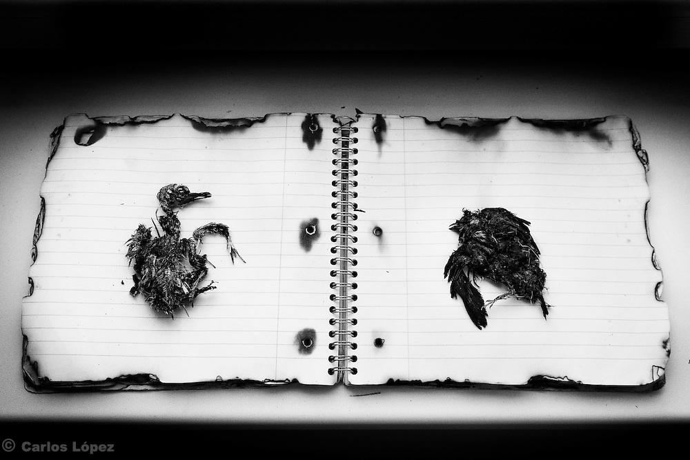 Photograph from the series: The Solitude of delirium.<br /> By Carlos L&oacute;pez.<br /> Fotograf&iacute;a de la serie: La soledad del deliro.