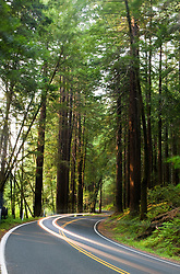 Vehicles drive through a grove of redwood trees along CA route 128, Hendy Woods State Park, Mendocino, California, USA.