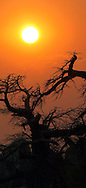 Alberto Carrera, Dawn Sunrise, Baobab, Adansonia digitata, Kubu Island, White Sea of Salt, Lekhubu, Makgadikgadi Pans National Park, Botswana, Africa