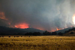 September 12, 2015 - Lake County, California, with winds increasing, the Valley Fire picks up speed as it heads towards Hidden Valley. (Kim Ringeisen / Polaris)