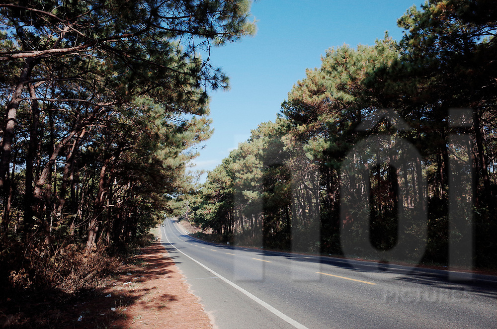 Deserted road going through a pine forest, Vietnam, Southeast Asia