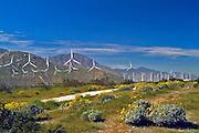 Coachella Valley, Wind Turbines, Desert, Electricity, Energy, Green Power, Palm Springs, San Gorgonio Pass, Whitewater, Wind Farm, clean, energy, environmentally friendly, farm, turbine, unique