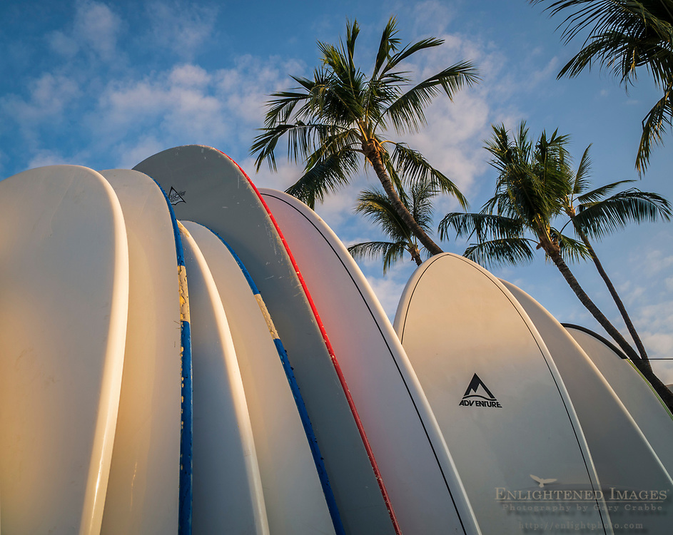 Surfboards and palm trees, Kailua-Kona, Hawaii