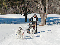 Friday's Six Dog and Open Class races during the 86th annual Laconia World Championship Sled Dog Races.  Karen Bobotas for the Laconia Daily Sun