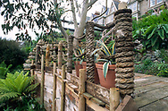 Raised wooden deck with rope barrier, Eucalyptus tree, Agaves in containers, tree fern and Echium pininana<br /> <br /> Newlyn Garden, Cornwall, England<br /> <br /> Garden Doctors Channel 4 series
