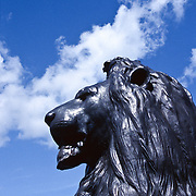 Detail of Lion statue at Trafalgar Square, London, against a blue sky.