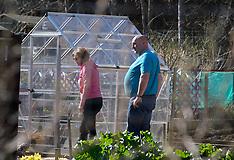 Gardeners tend their allotments, Livingston, 7 April 2020