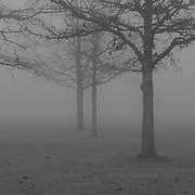 &quot;Into the Beyond&quot; B&amp;W <br /> <br /> Beautiful fog covered landscape!! Trees surrounded in fog as thick as pea soup!!<br /> <br /> All about Fog by Rachel Cohen