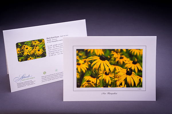A sure sign of late summer - the gorgeous display of the native wildflower, the black eyed susan,  growing in fields and along the roadsides of NH. <br />