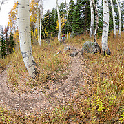Heather Goodrich rides autumn Singletrack on Teton Pass in Wyoming. Philip's Ridge Trail.