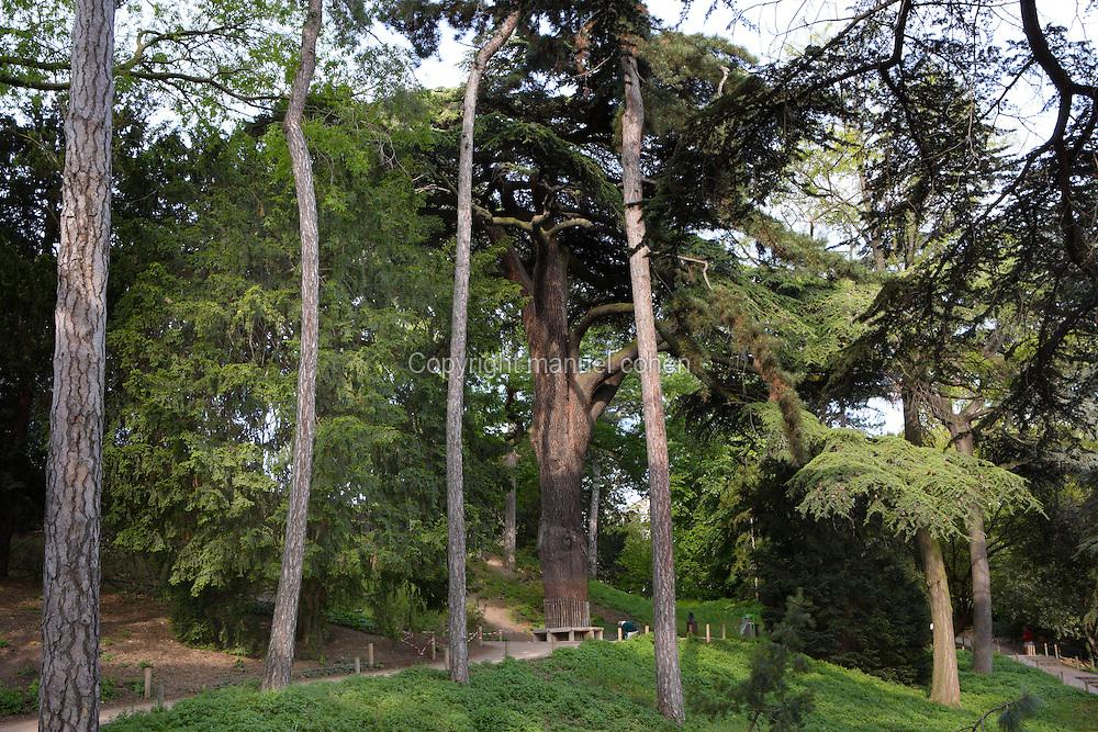 Jardin des Plantes Paris   Manuel Cohen