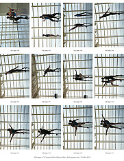 Ballet Contact Sheets of all Images