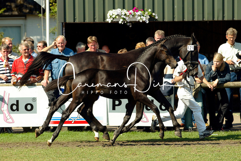 121-Wivemmie<br />KWPN Paardendagen Ermelo 2003<br />Photo &copy; Dirk Caremans