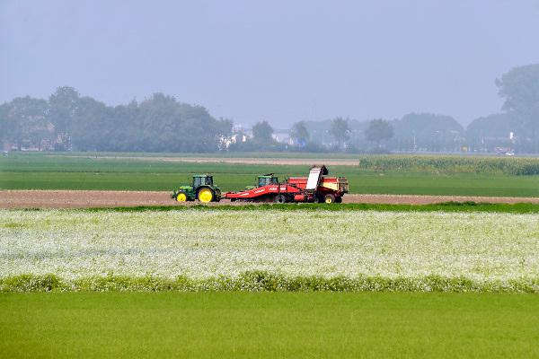Nederland, Nagele, 4-9-2018Aardappeloogst in de Flevopolder. Door de langdurige droogte is de oogst lager als normaal Foto: Flip Franssen