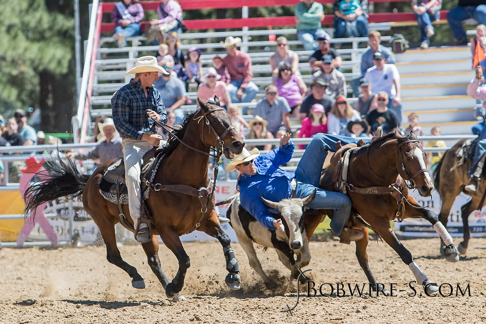Steer wrestler Beau Clarke makes his run in the first performance of the Elizabeth Stampede on Saturday, June 2, 2018.