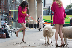 © licensed to London News Pictures. London, UK 11/10/2012. A M&S model trying to avoid a sheep's faeces as models walking with a flock of sheep in Oxford Street in support of The Campaign for Wool's Week. M&S calling on the British public to 'shwop' unwanted woollen items to be reused, recycled or resold through the M&S and Oxfam partnership. Photo credit: Tolga Akmen/LNP