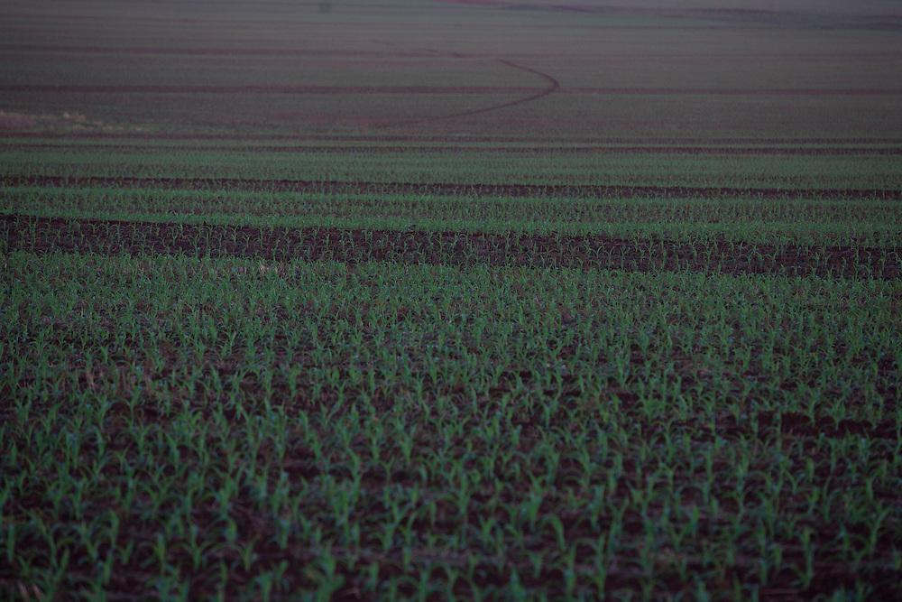 Centralina_MG, Brazil.<br /> <br /> Plantacao de cana-de-acucar proximo a rodovia BR 153 em Centralina, Minas Gerais.<br /> <br /> The sugar cane agriculture near the highway BR 153 in Centralina, Minas Gerais.<br /> <br /> Foto: LEO DRUMOND / NITRO